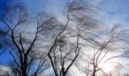 В Бишкеке ожидается шквалистый ветер