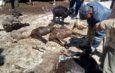 Из-за снегопада на Иссык-Куле погибла отара овец