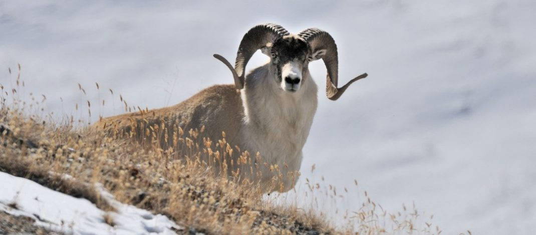 В Кыргызстане открыт сезон охоты на копытных диких животных