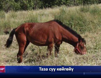 Кадыр Маликов 1,5 км аралыкта таза суу чыгаруу ишине кол кабыш кылган