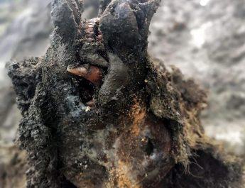 В Сибири найдена мумия оттаявшего пещерного медведя (фото)